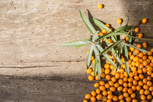 Sea buckthorn berries on a wooden background. Autumn decorative frame or border with fresh ripe sea-buckthorn berries and old wooden plank