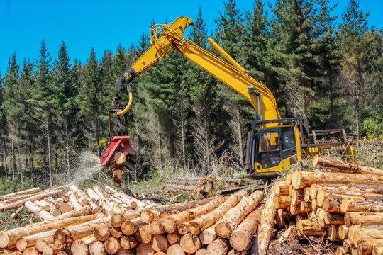 Harvester Processing Pine