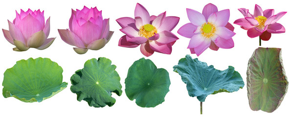 Keuken foto achterwand Waterlelies Lotus flower pink with green lotus leaves set against white background. Have clipping path