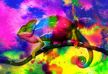 Fototapete -  chameleon - and wild colors