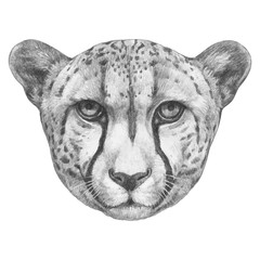 Portrait of Cheetah. Hand-drawn illustration. Vector