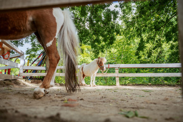 Picture of adorable pony horses standing outdoors near fence.