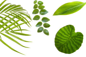 plant leaf over white background Wall mural