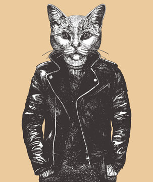 Portrait of British Shorthair Cat in leather jacket, hand-drawn illustration,  vector