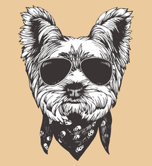 Portrait of Yorkshire Terrier Dog with sunglasses and scarf. Hand-drawn illustration. Vector