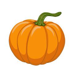 Cartoon pumpkin illustration. Object isolated on white background. Symbol of autumn season. Element for design.