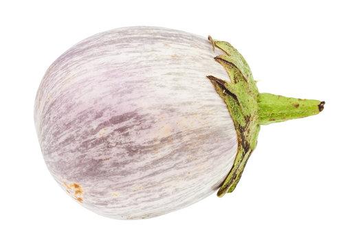 single ripe round striped purple eggplant isolated