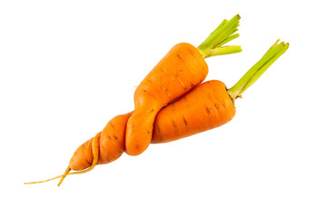 Hugging carrots isolated on white background