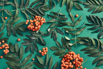 Sorbus and leaves on dark green background top view