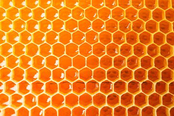 Honeycombs with sweet golden honey on whole background, close up