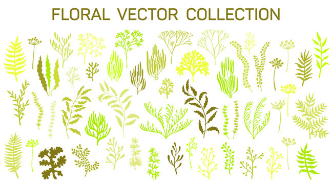 Floral vector set of branches, corals, seaweeds