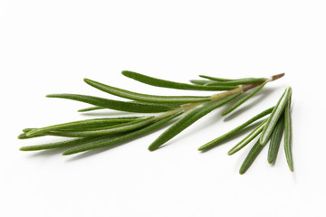 rosemary leaves on a white isolated background