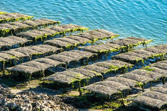 Parc d'élevage huîtres à Morbihan, Bretagne, France