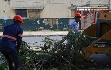 Workers cut tree branches in preparation for Storm Dorian in Santo Domingo