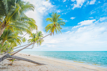 Coconut trees by the beach.