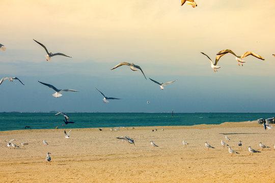 beautiful seagulls fly near the beach