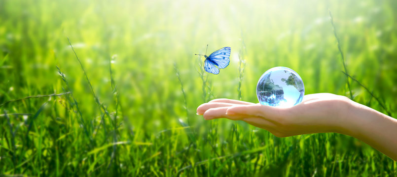 Earth crystal glass globe ball in human hand, flying butterfly with blue wings, fresh juicy grass background. Saving environment, save clean green planet, ecology concept. Card for World Earth Day.