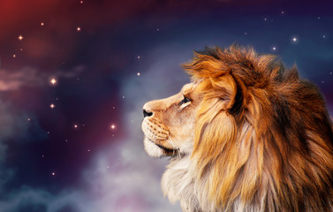 Poster Lion African lion and night in Africa. African savannah moonlight landscape, king of animals. Proud dreaming fantasy lion in savanna looking forward on stars. Majestic dramatic deep starry sky.
