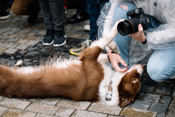 dog poses for the photographer