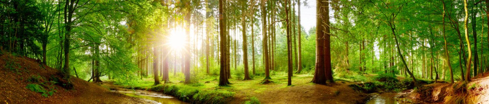 Panorama vom Wald im Frühling mit heller Sonne, die durch die Bäume strahlt