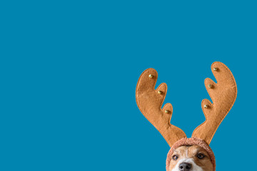 Dog wearing headband with Christmas reindeer antlers against solid color background