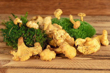 Pile of chanterelle mushrooms on wooden background. Chanterelle wild edible mushrooms.