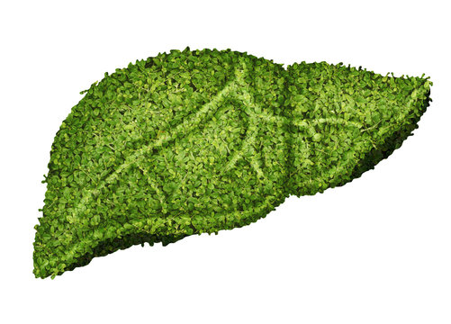 green leaves create liver human shape design with blood vessel