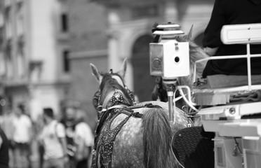 Koń ciągnący dorożkę w Krakowie, Polaska, widok z tyłu, z bliska, w tle rozmyte budowla i ludzie, czarno-biały