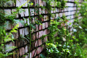 Wall of bricks and natural trees.
