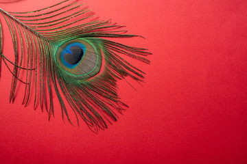 Photo sur Plexiglas Paon Bright beautiful peacock feathers on red background