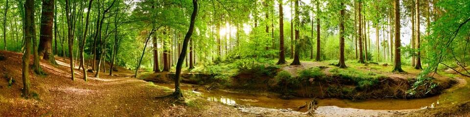 Idyllisches Waldpanorama mit grünen Bäumen und hellem Sonnenlicht im Hintergrund