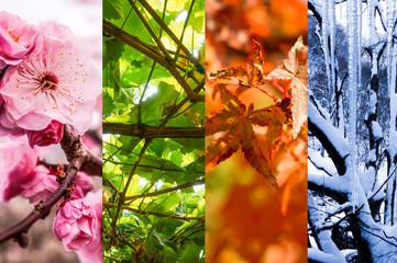 春夏秋冬のコラージュ背景画像