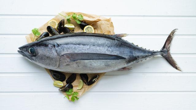 Fresh fish. Whole tuna on white boards background.