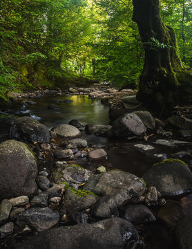 Small river and mossy rocks in a green forest. Peaceful landscape scene.