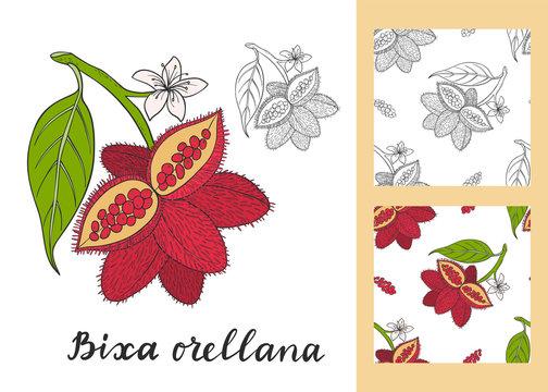 Bixa orellana (annatto, achiote) set with seamless patterns.