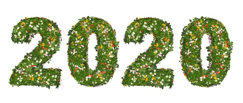 2020 - Blumenwiese