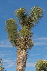 Details of a Joshua Tree's Vegetation