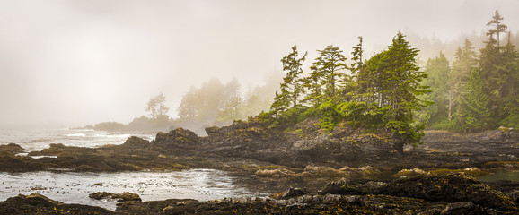 Fotobehang Kust Misty shoreline of Botany Bay on west coast of Vancouver Island, British Columbia, Canada, with sun beginning to beak through the fog.