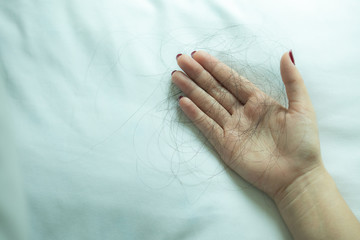 Hair loss, hair fall everyday serious problem,hair loss problem on hand isolated on white background,women have Hair in hand on Pillow.with copy space.
