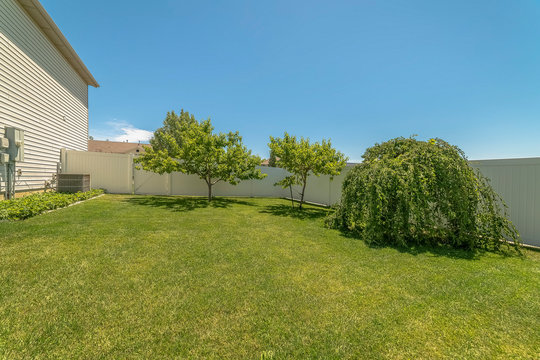 Vivid greenery at the spacious yard of a home under blue sky on a sunny day