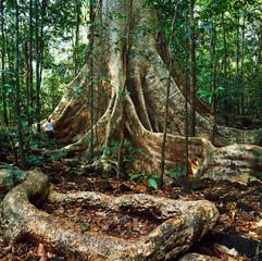 Papiers peints Noir a jungle landscape in gabon
