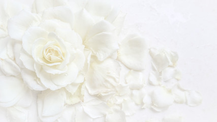 Beautiful white rose and petals on white background. Ideal for greeting cards for wedding, birthday, Valentine's Day, Mother's Day Papier Peint