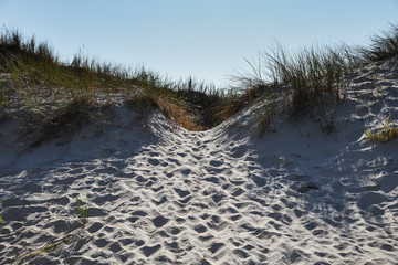 Wall Mural - Sandy dunes at Baltic sea coast.