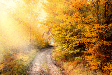 Foto op Canvas Meloen Sunny Autumn Road in golden forest, beautiful fall season