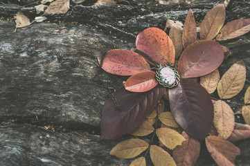 autumnal background of vintage pendant lying on wooden log in leaves