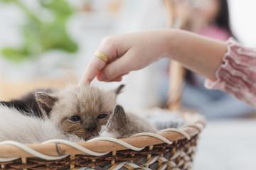 asian girl and persian kitten