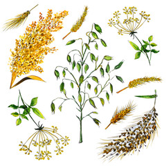 cereals ears wheat rye barley watercolor illustration design