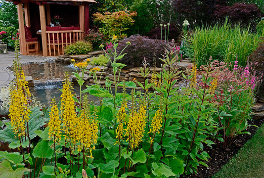 The pond area in an aquatic garden and planted rockery, Ligularia and selection of flowers, shrubs and grasses