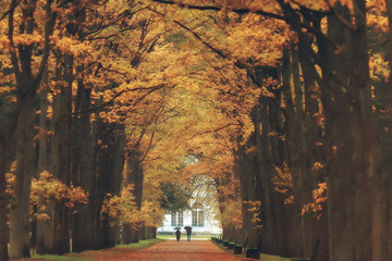 Foto op Aluminium Herfst October landscape / autumn in the park, yellow October trees, alley in the autumn landscape