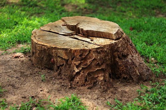 Tree stump in the forest 01